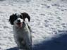 Jackie, Male, 3 Years Old, English Springer Spaniel